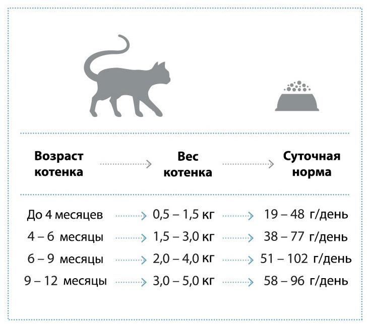 Чем кормить месячного котенка как кормить месячных котят